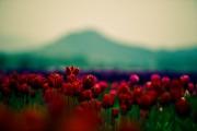http://thumbnails24.imagebam.com/10077/940abf100765606.jpg
