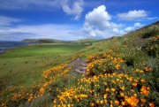 Amazing California Wallpapers Ff0dda107965243