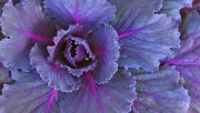 Flowers and Gardens HQ wallpapers Collection 1 673f85108222476