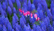 Flowers and Gardens HQ wallpapers Collection 1 B7ec05108223929