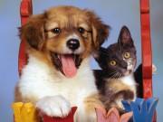 Cuteeeeee Animals wallpapers 6ed573108284757