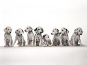 Cuteeeeee Animals wallpapers 7be1cb108284774
