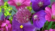 Flowers and Gardens HQ wallpapers Collection 2 136e59108363530