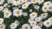 Flowers and Gardens HQ wallpapers Collection 2 4be1e6108363800